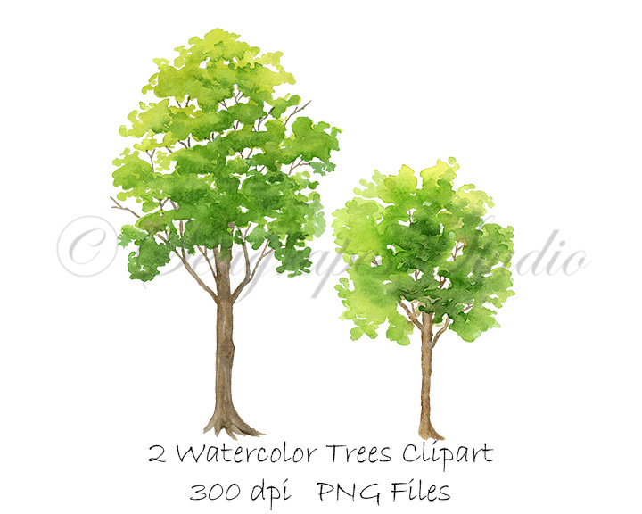 Watercolor Spring Trees Clipart Seagrapes Studio